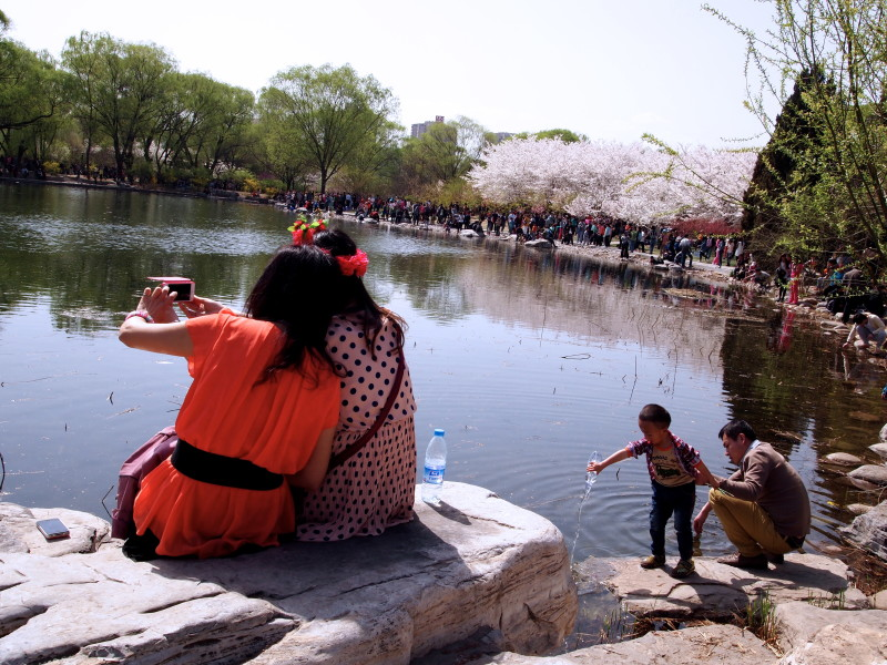 where to see cherry blossom in china